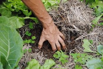 calendrier lunaire amélioration des sols terre main