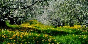 calendrier lunaire arbre fruitier
