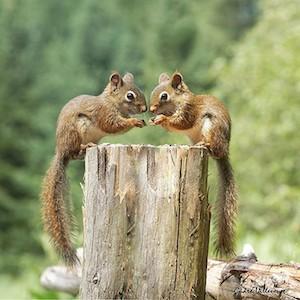 calendrier lunaire déjà inscrit au calendrier lunaire ecureuil jumeaux