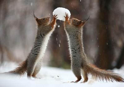 calendrier lunaire du 3 au 4 février deux-ecureuil-neige-boule