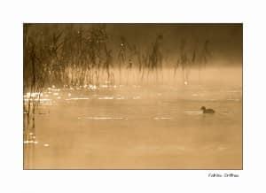 calendrier lunaire nature animaux migration oiseaux la lune