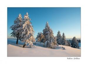 calendrier lunaire nature hiver