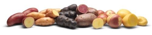 calendrier lunaire pomme de terre variétés