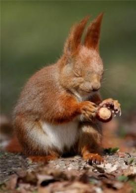 calendrier lunaire sante psy ecureuil concentration ecureuil