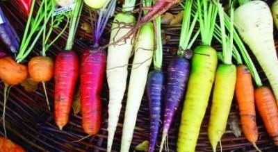 calendrier lunaire carotte couleurs 4