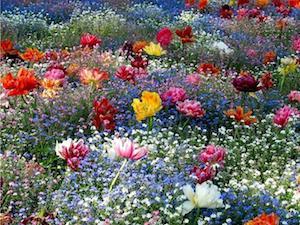 calendrier lunaire du 28 au 29 février fleurs des champs 4