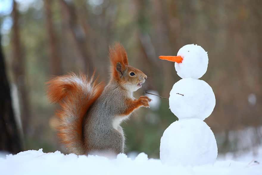 calendrier lunaire du 7 février - ecureuil
