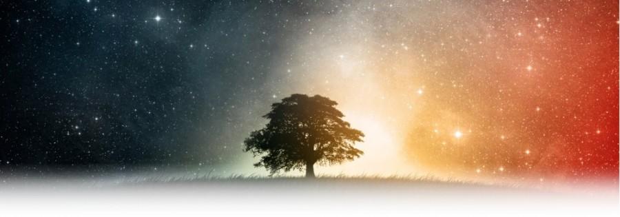 calendrier lunaire lexique du calendrier lunaire arbre clair obscur