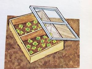 calendrier lunaire semis laitue sous châssis