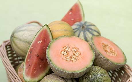 calendrier lunaire culture du melon