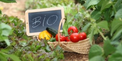 calendrier lunaire jardinage biologique