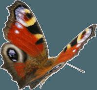 calendrier lunaire - papillons au jardin potager bio