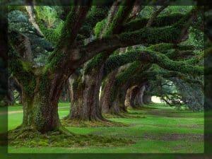 calendrier lunaire jardin du 6 aout