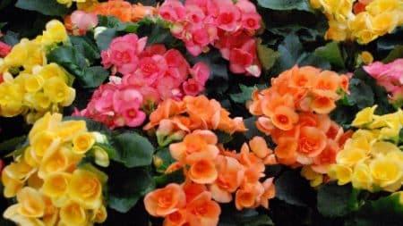 calendrier lunaire jardin du 6 septembre