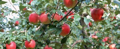 calendrier lunaire jardin du 10 septembre