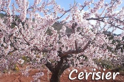 calendrier lunaire cerisier