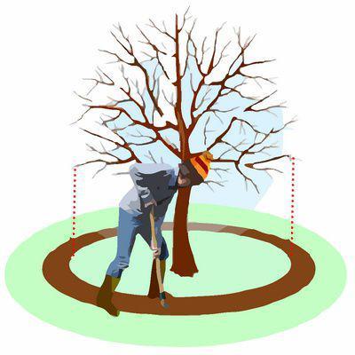 calendrier lunaire mauvaises recoltes taille racines