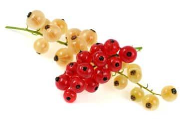 calendrier lunaire groseilles rouges et blanches des groseilliers