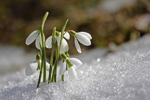 calendrier jardiner avec la lune 2018 - fevrier