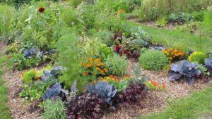 jardiner avec la lune 2018 - juillet