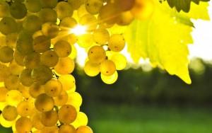 calendrier lunaire nature viticulture